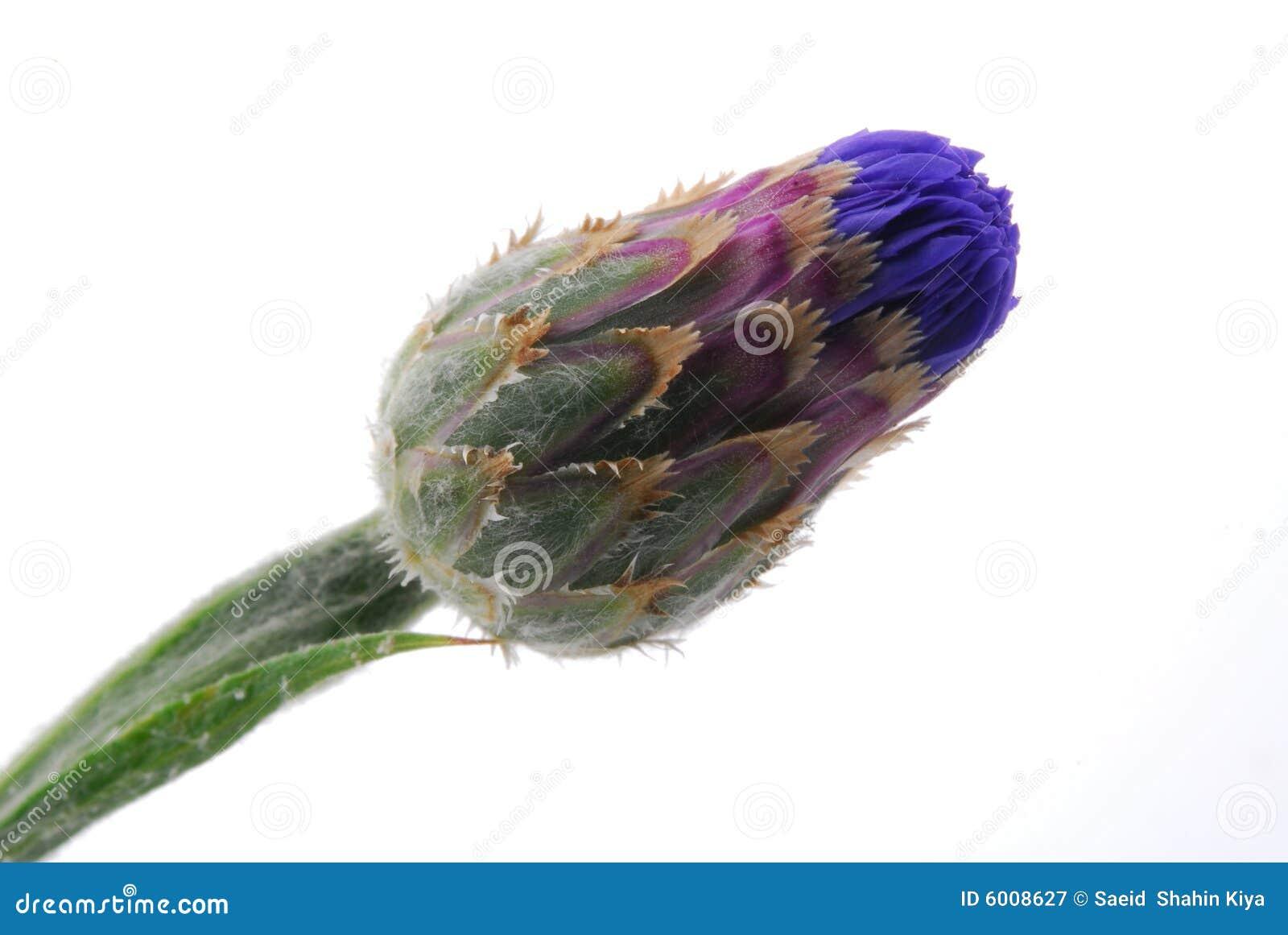 Brote de flor colorido