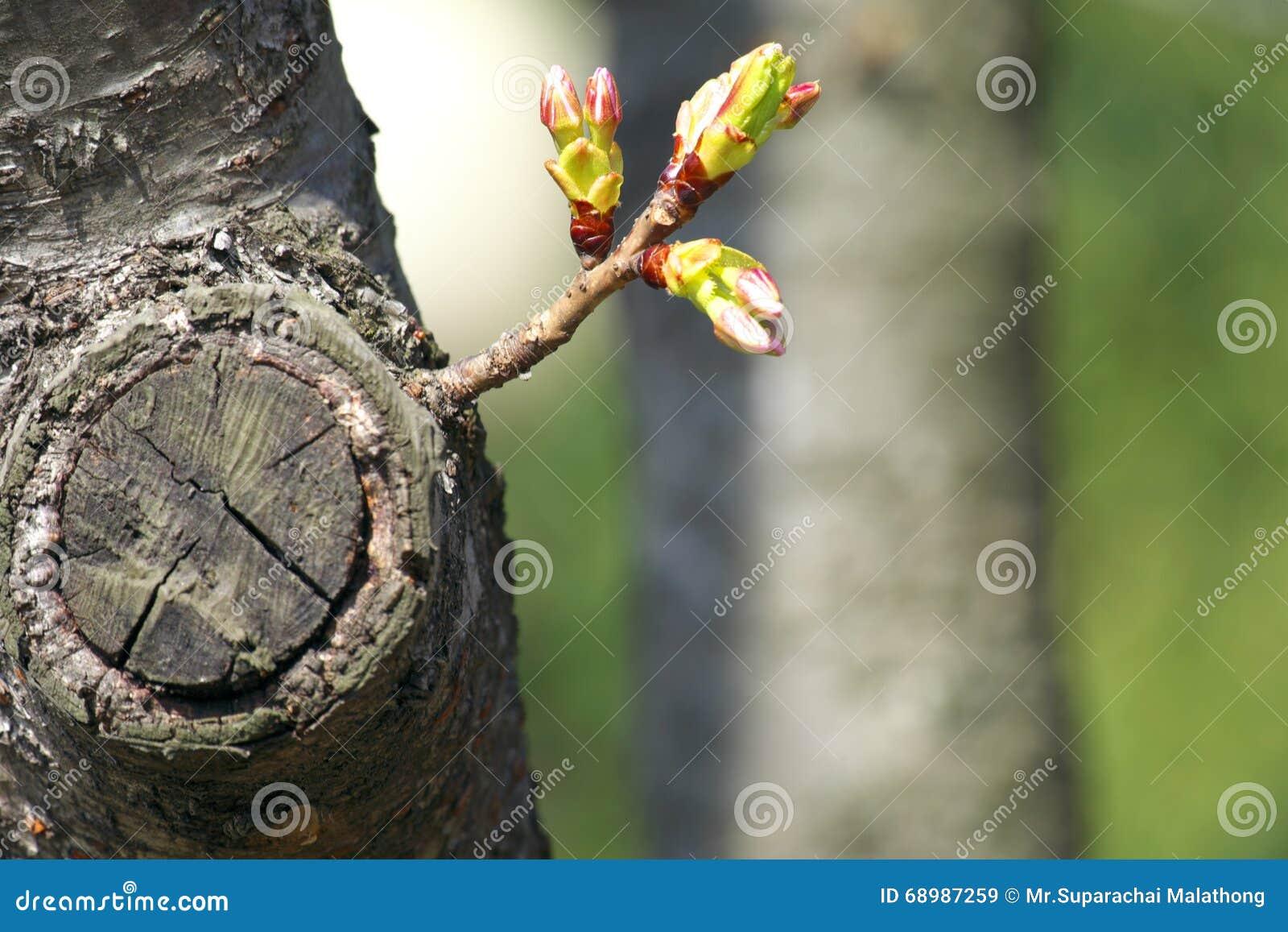 Brote que crece de árbol