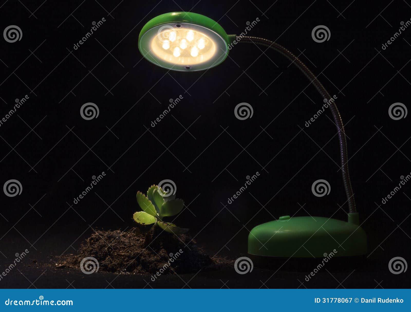 Brote y lámpara de mesa jovenes en un fondo negro