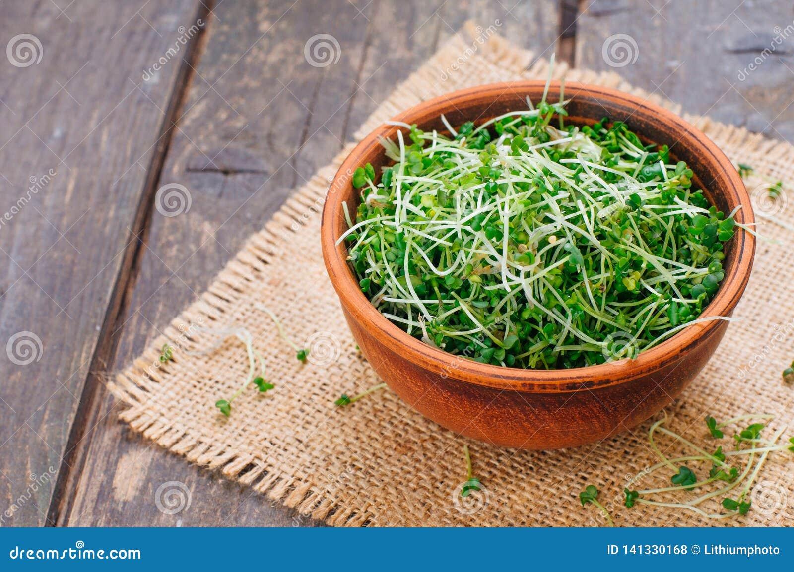 Brotes micro de los verdes de la mostaza en cuenco de cerámica