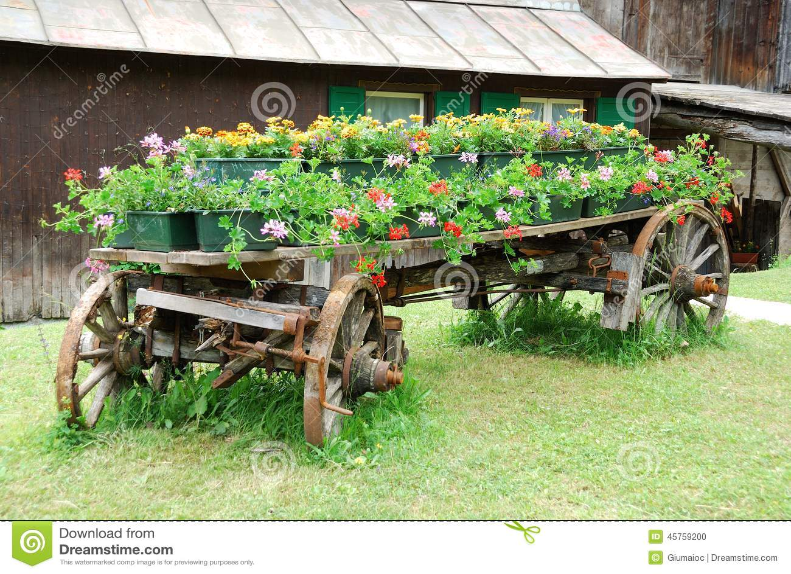 Brouette avec des fleurs photo stock image du jardinage for Brouette de jardin
