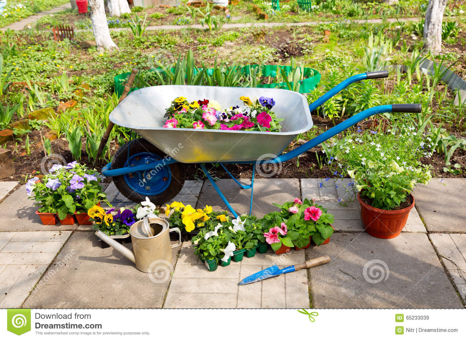 Brouette Avec Les Fleurs Et Les Outils De Jardin Mis En ...