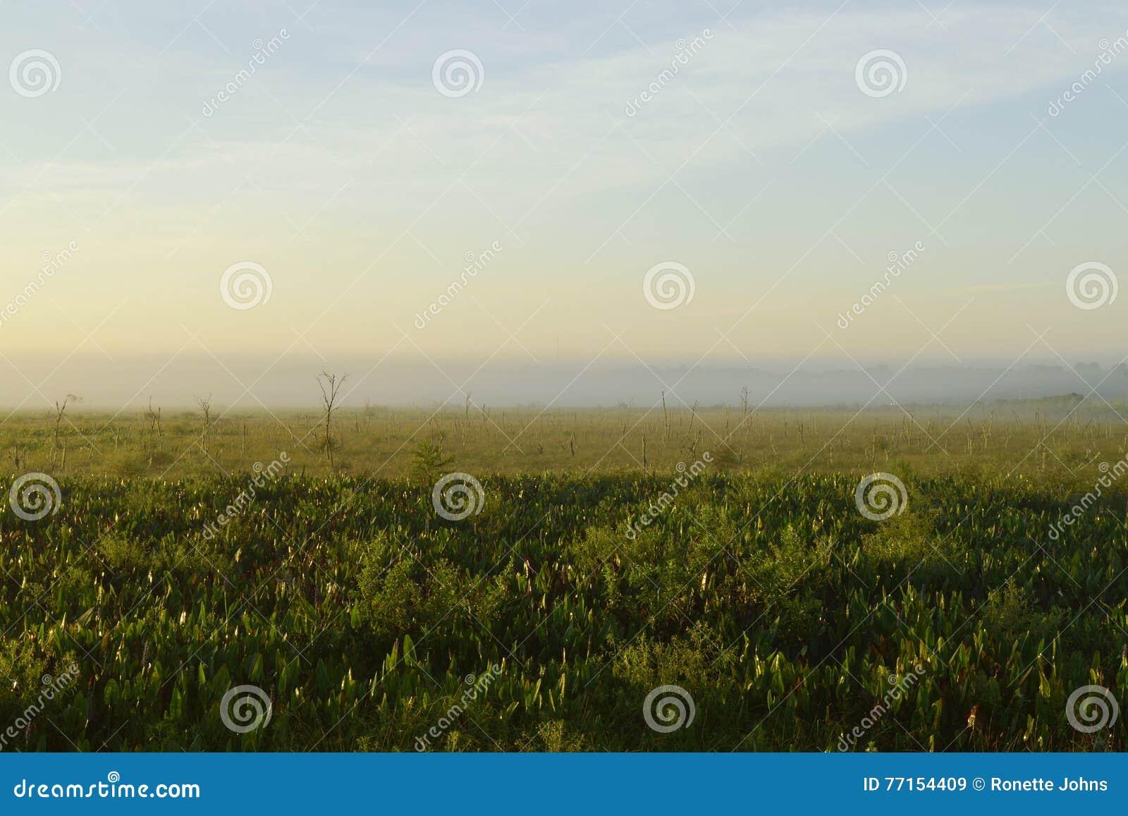 Brouillard de début de la matinée plus de