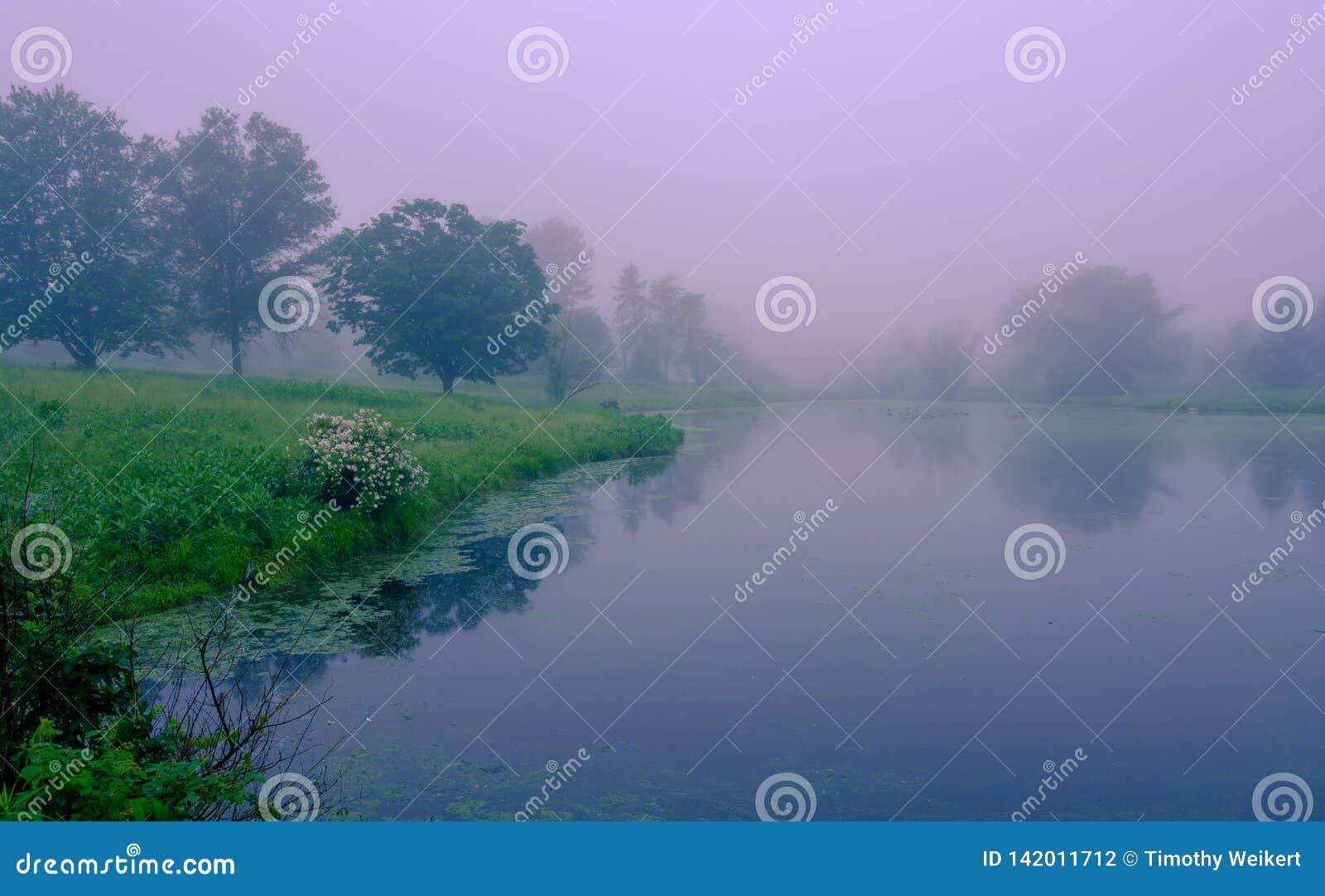Brouillard de début de la matinée sur le lac Étang brumeux avec des réflexions de l eau Endroit abandonné, belle vue de parc