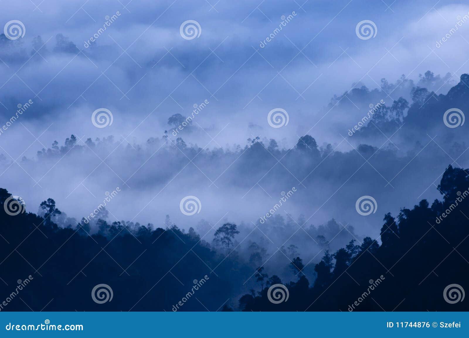 Brouillard de matin