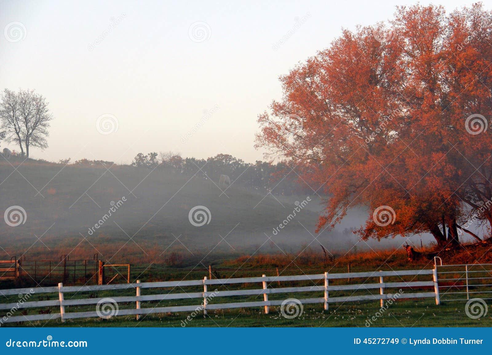 Brouillard de matin de chute