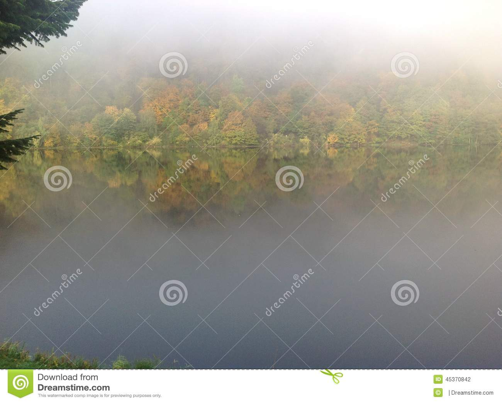 Brouillard et forestlake