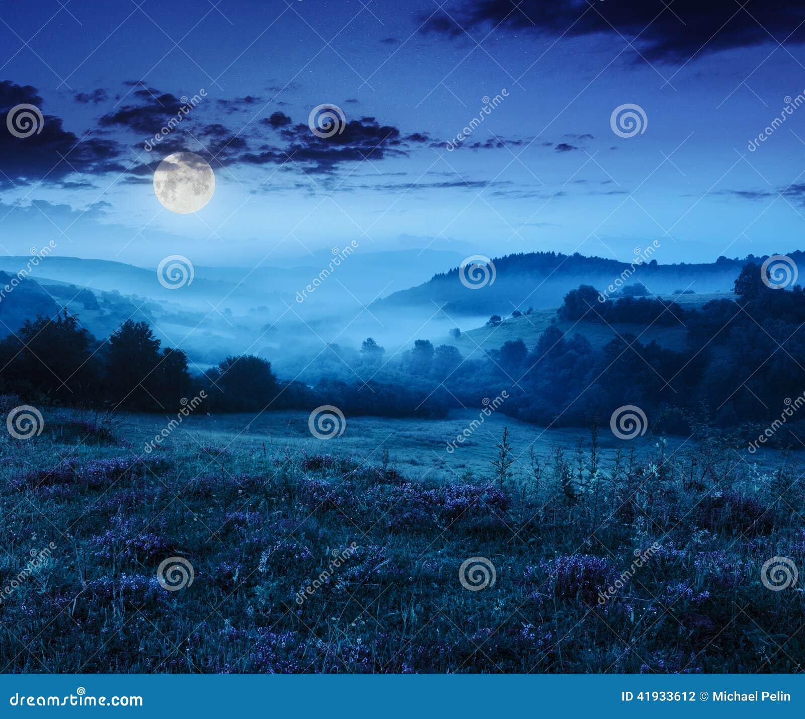 Brouillard froid en montagnes sur la forêt la nuit