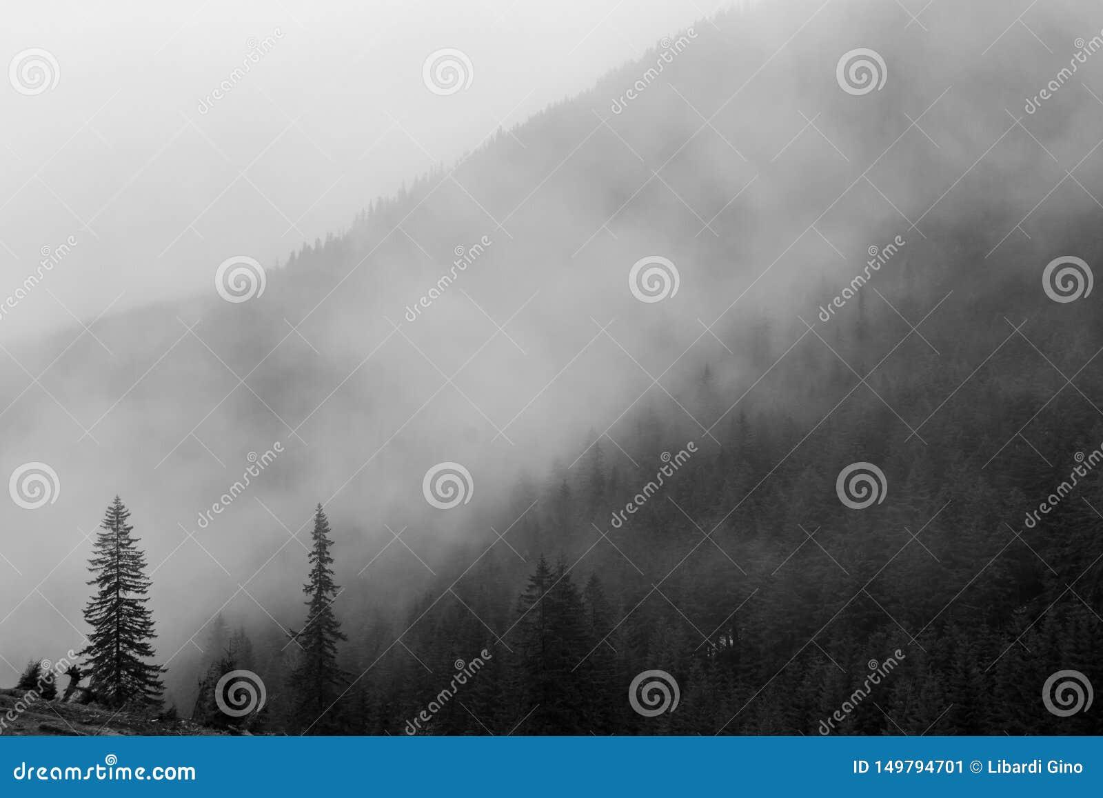 Brouillard mystique
