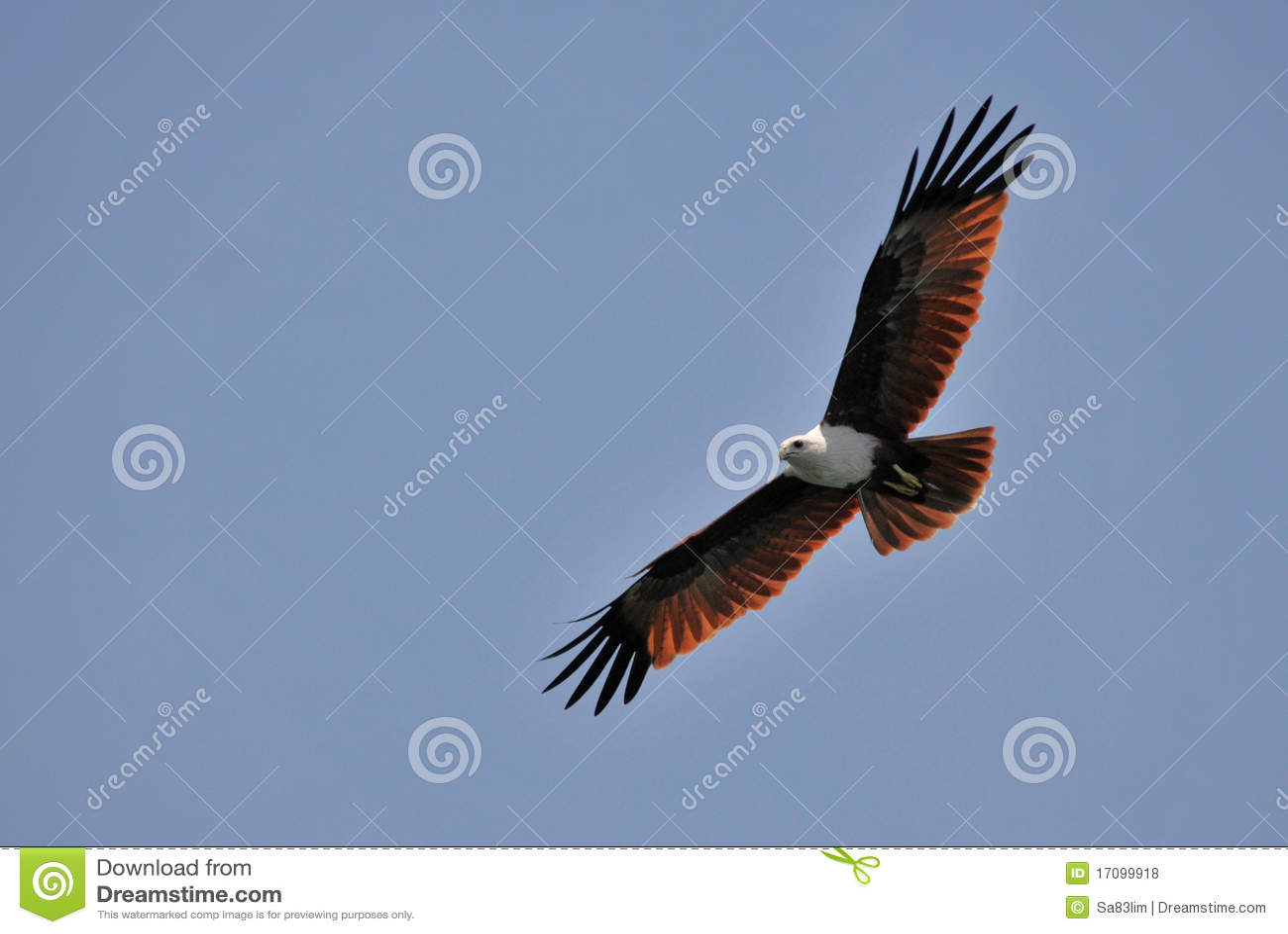 Brown-Adler