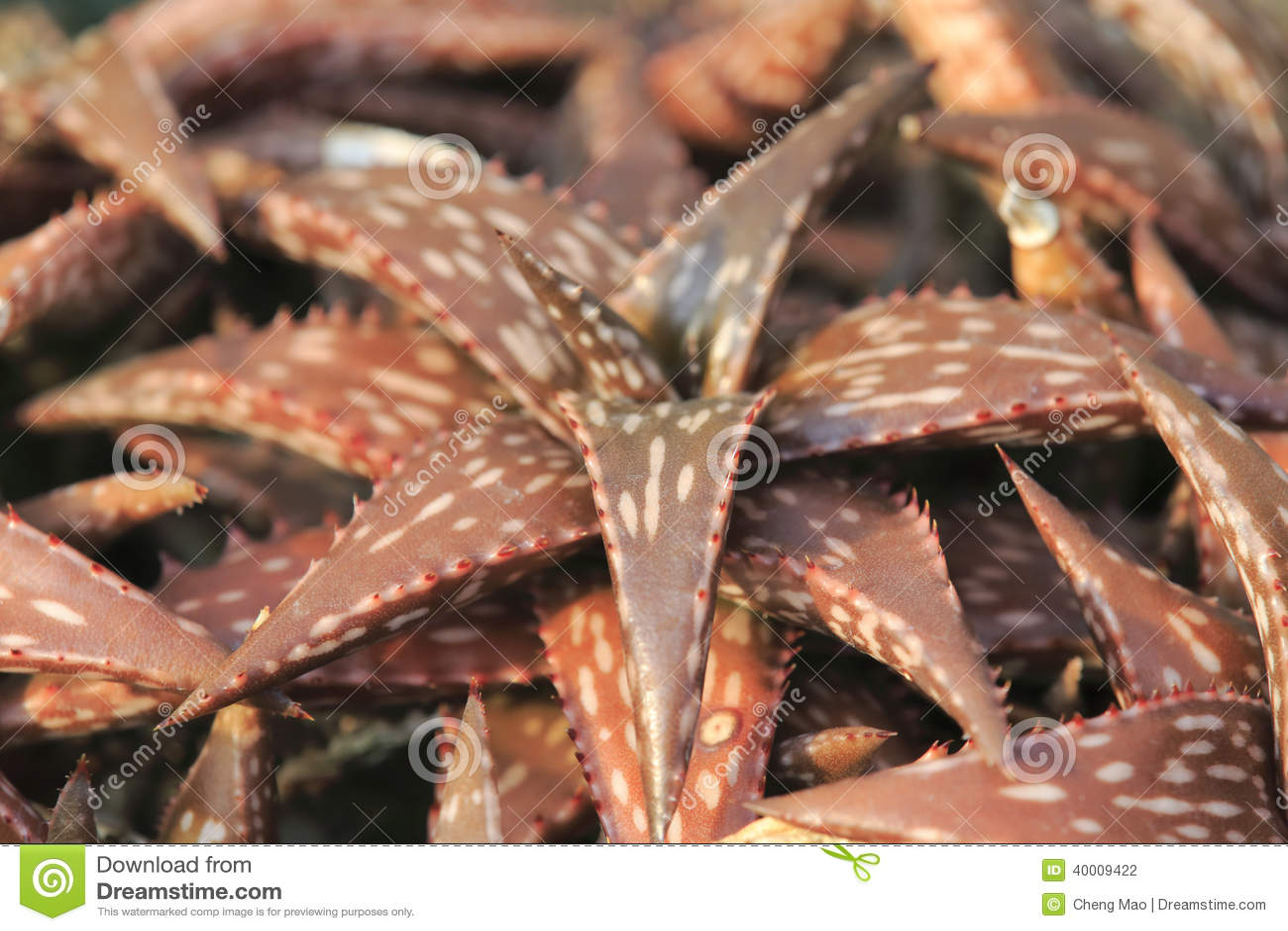Brown Aloe Stock Photo Image Of Light Clipping Desert