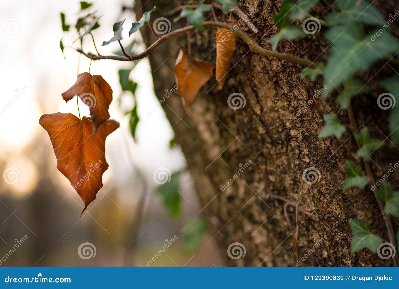 Brown Autumn Leaf