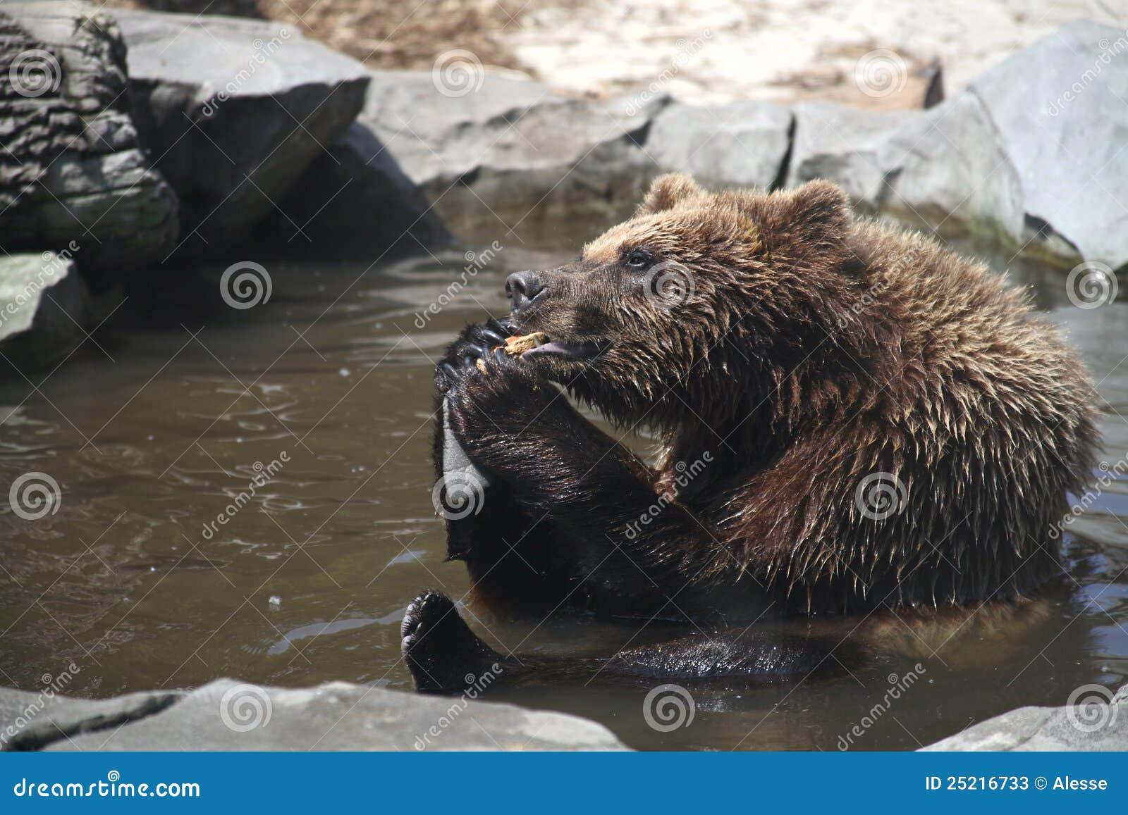 Lustige Bären Stock Photos Lizenzfreie Lustige Bären Bilder