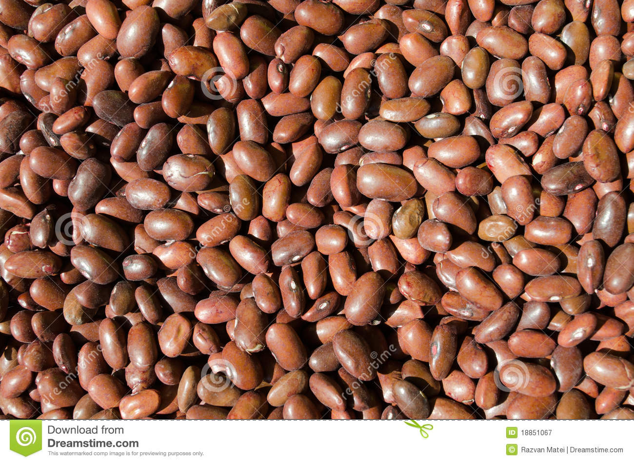 Brown Beans Healthy Fiber Food Stock Image Image Of