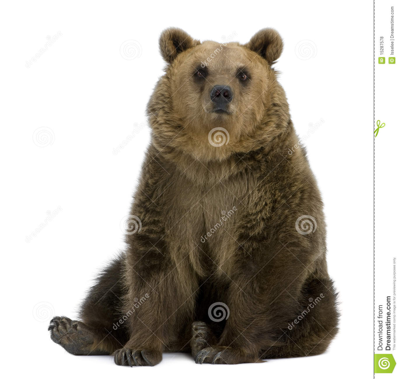 Brown Bear 8 Years Old Sitting Royalty Free Stock Photos
