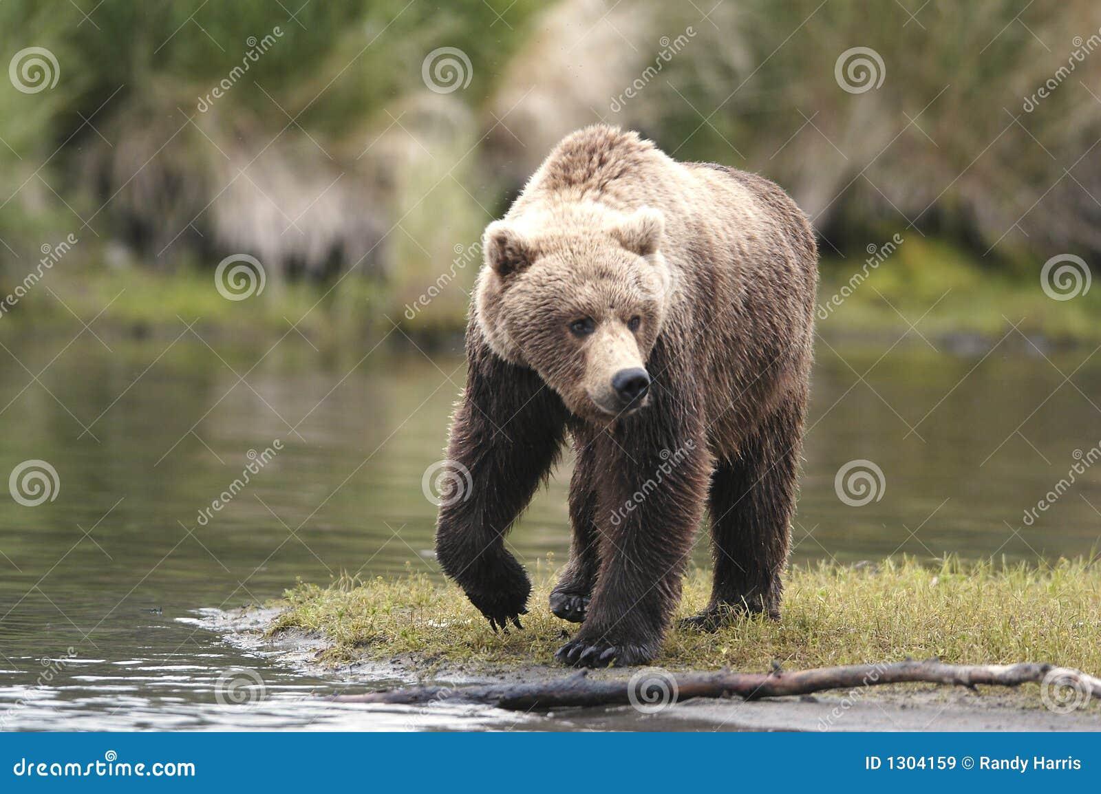 Enrichment & Animal Welfare | Wild Welfare  |Brown Bear Food