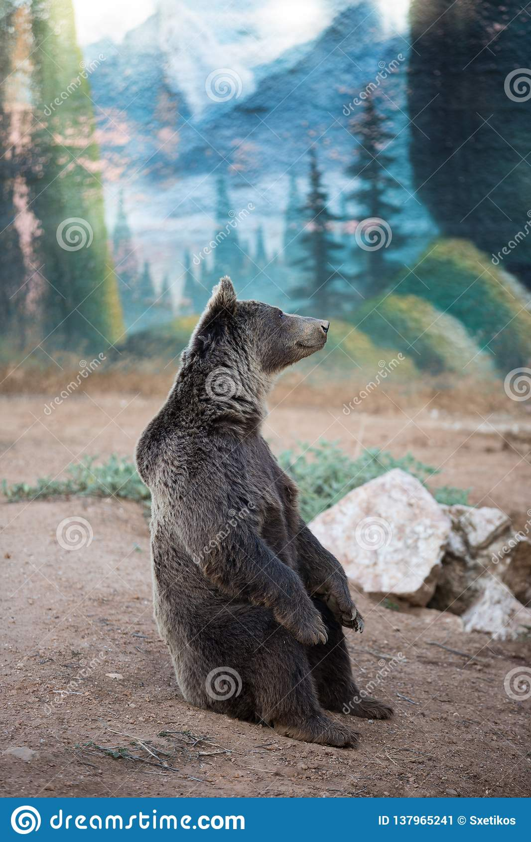 A brown bear sitting