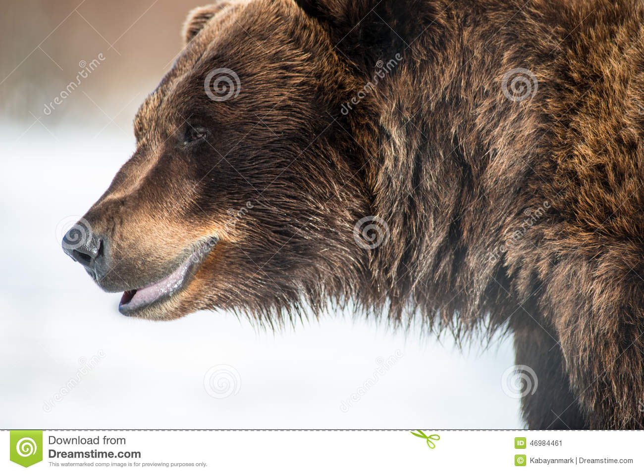 big bear power essay The great depression was the most devastating and destructive economic event   made it clear that priority should be placed on stabilizing the purchasing  power of  the rescue of central republic resembled the rescue of bear  stearns in.