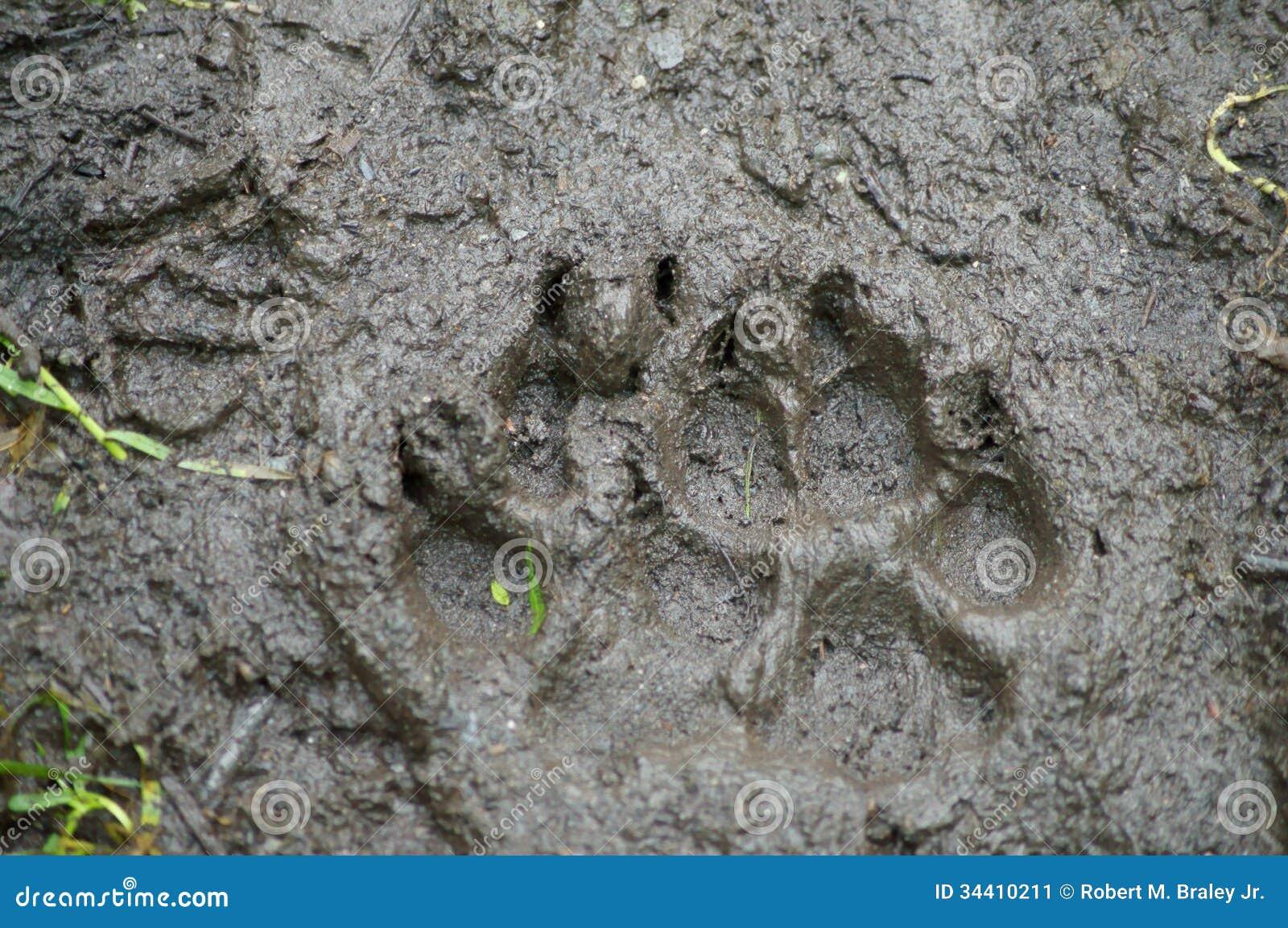 Brown Bear Track