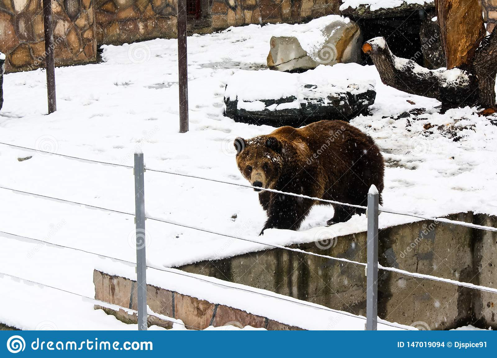 Brown bear at the zoo