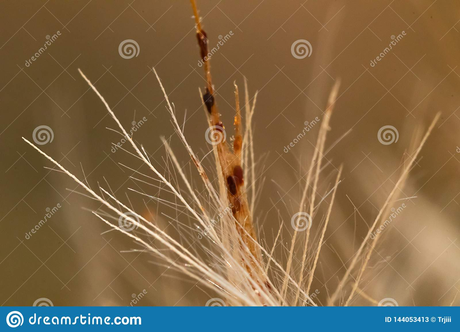 Brown beige stiff multi-branched twig