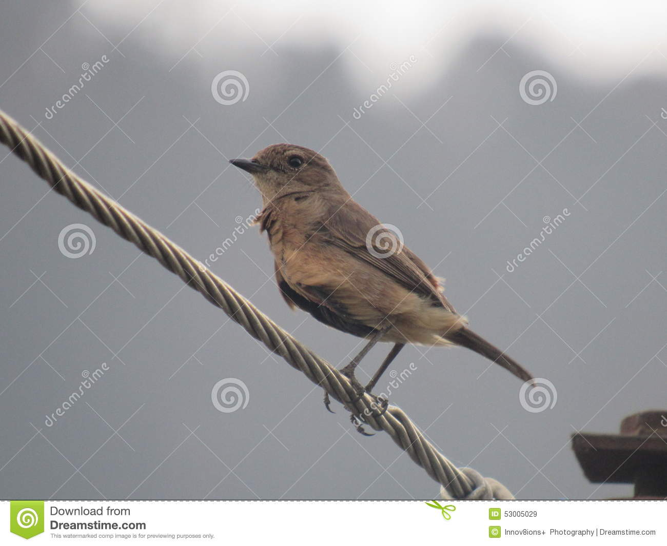 Brown Bird stock image. Image of wire, brown, tailed - 53005029
