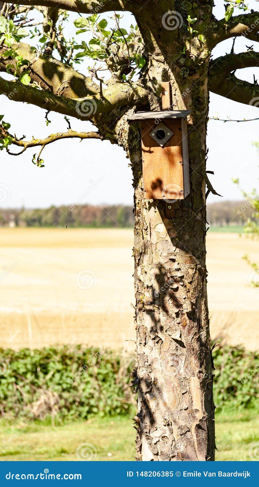 Brown birdhouse wieszał na bagażniku drzewo z polem w tle