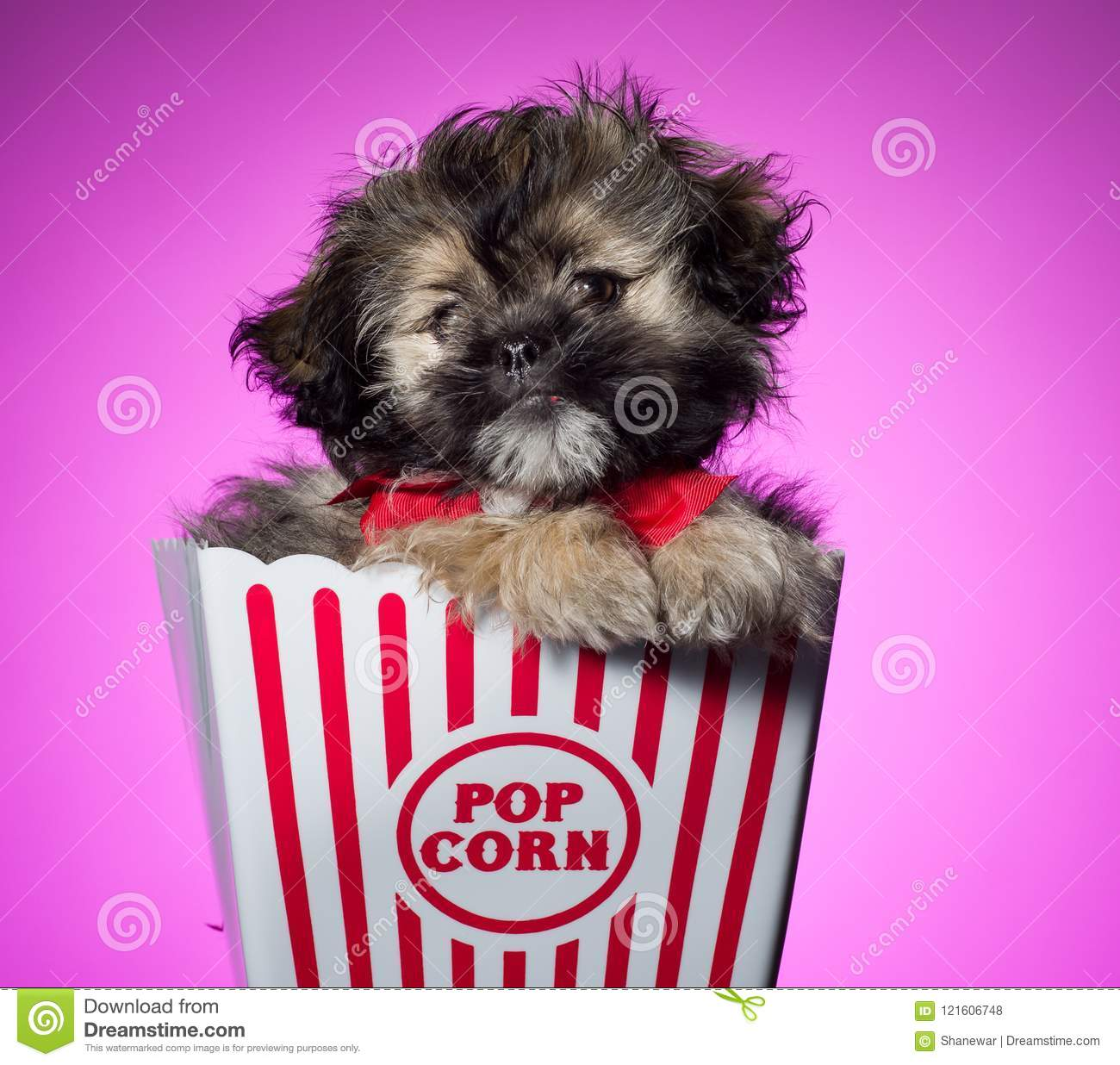Shih Tzu Puppy In A Basket On Colored Background Stock Photo Image Of Silly Young 121606748