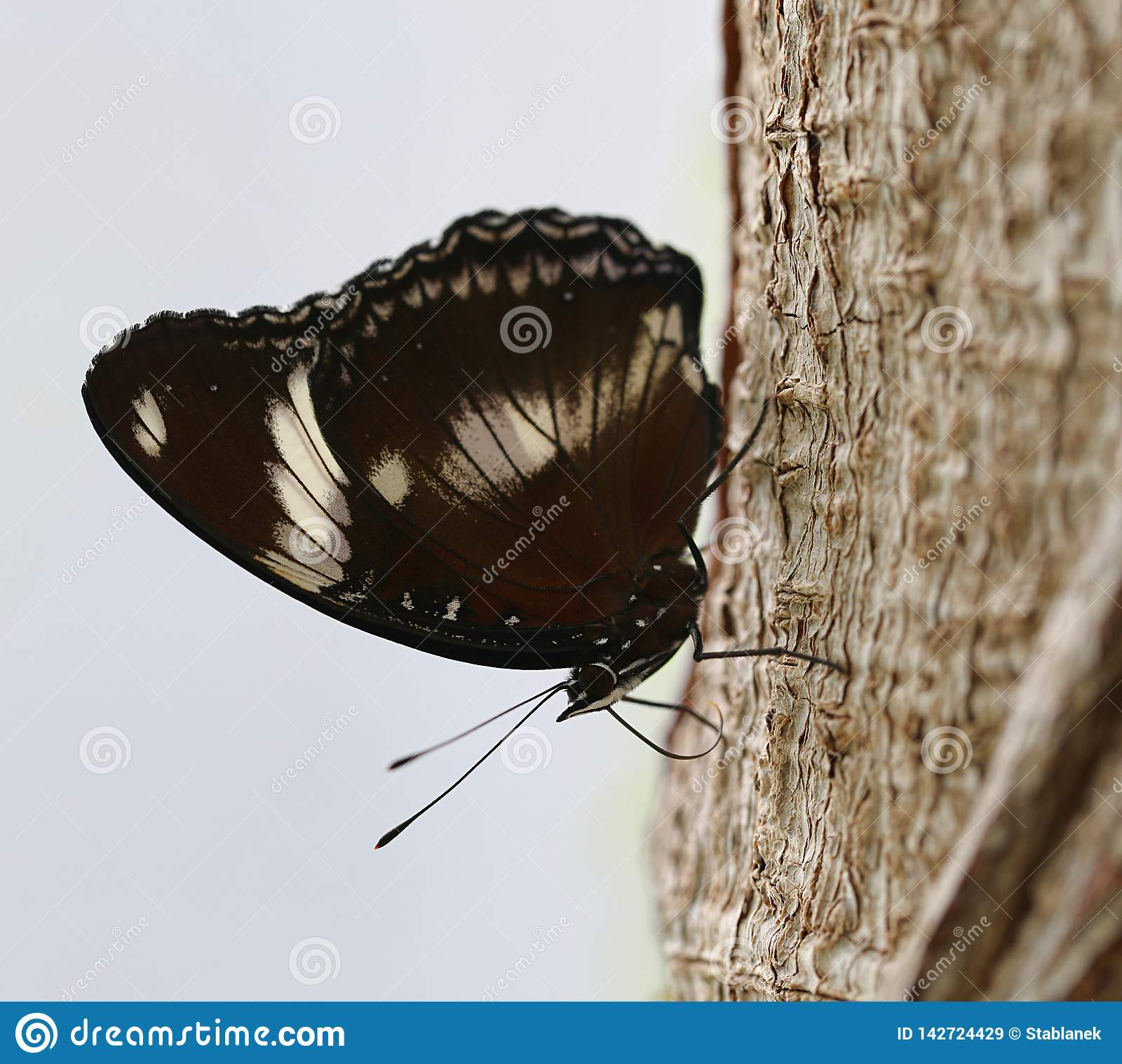 Butterfly sitting on a tree