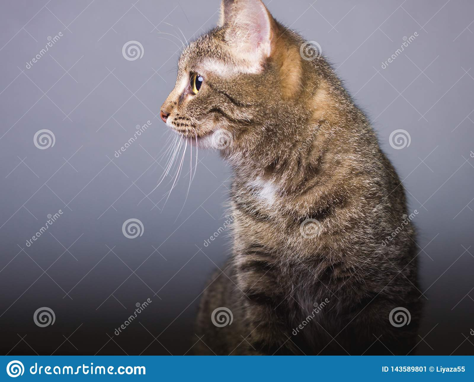 Brown cat look looking away, profile photo of pet