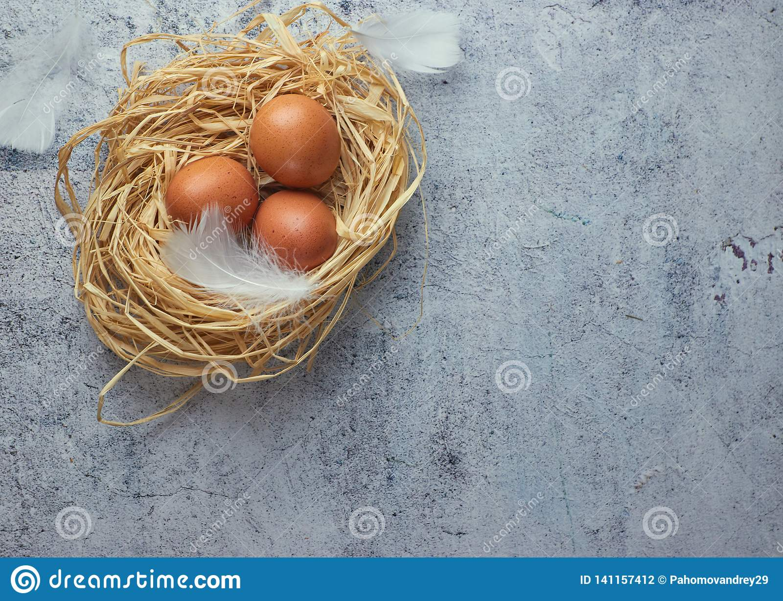 Brown chicken eggs with white feathers in hay nest on light concrete. closeup of a farm of eggs. copy space. horizontal view of