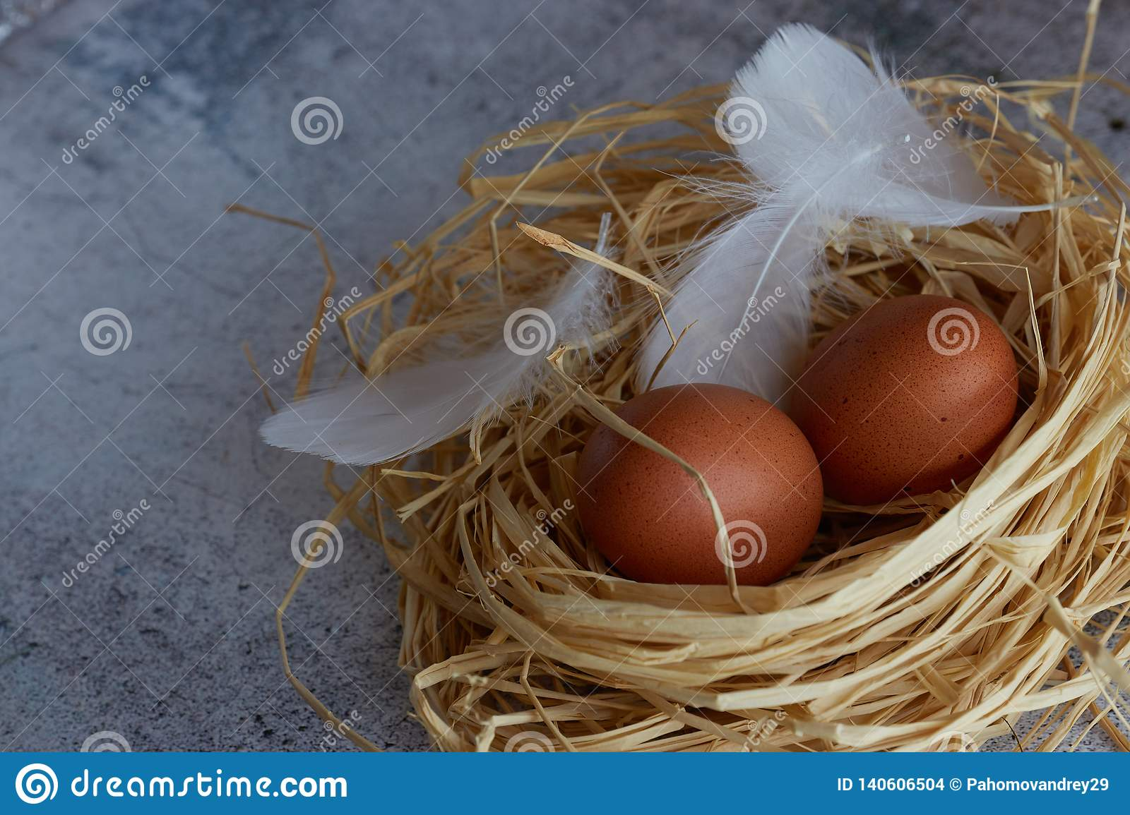 Brown chicken eggs with white feathers in hay nest on light concrete. Copy space. horizontal view of raw chicken eggs. Village