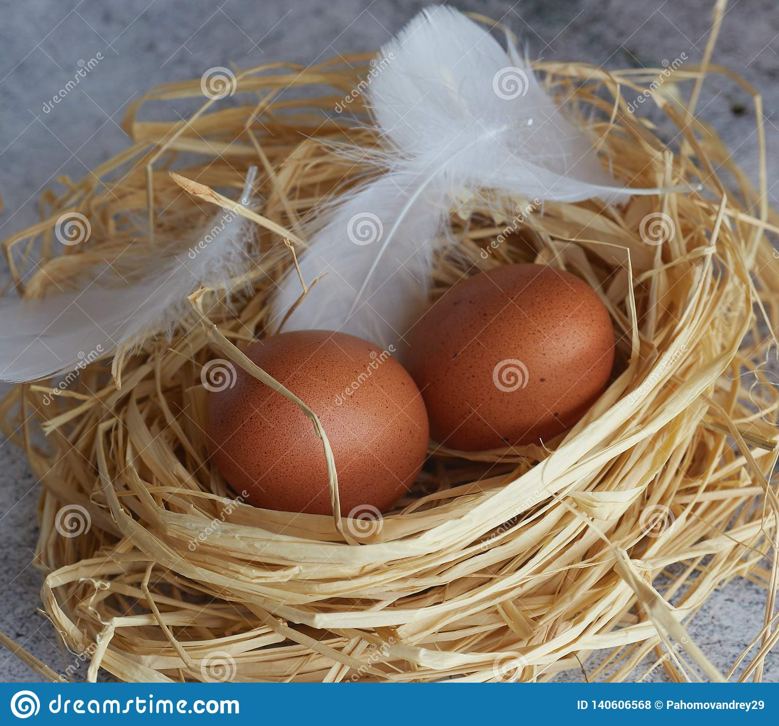 Brown chicken eggs with white feathers in hay nest on light concrete. closeup of farm eggs. horizontal view of raw chicken eggs.