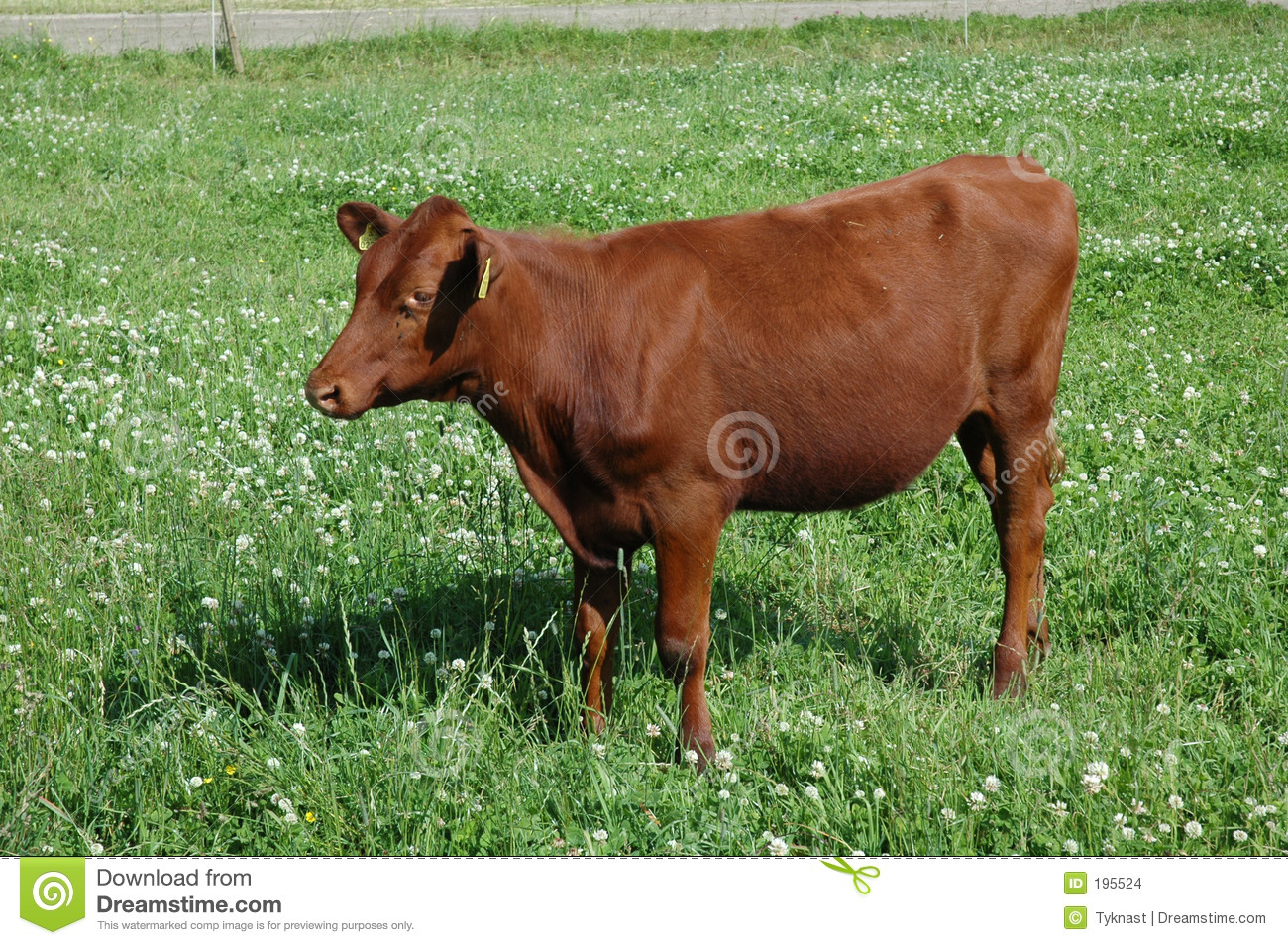 Brown Cow Stock Images Image 195524
