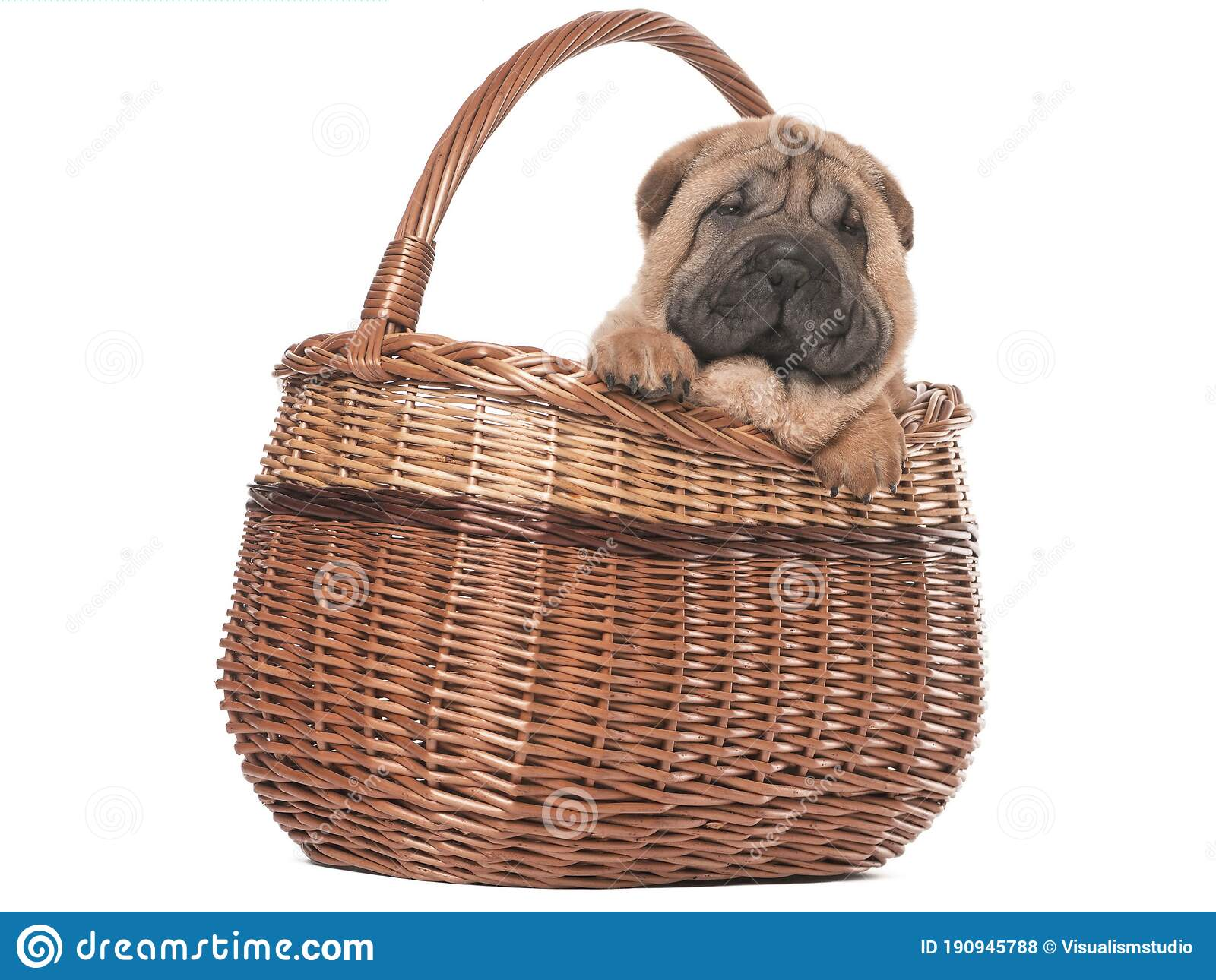 Brown Dog Puppies Funny Smiling Puppy Dog A Paw And Cute Puppy On White Stock Photo Image Of Brown Care 190945788
