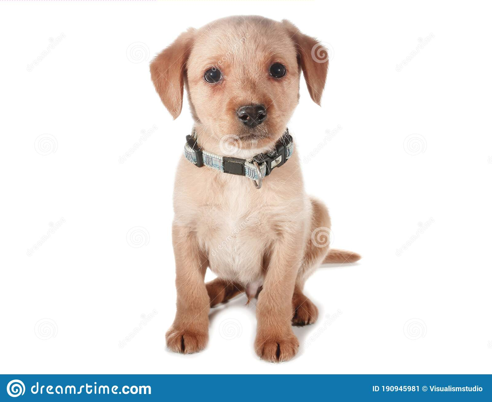 Brown Dog Puppies Funny Smiling Puppy Dog A Paw And Cute Puppy On White Stock Image Image Of Baby Happy 190945981