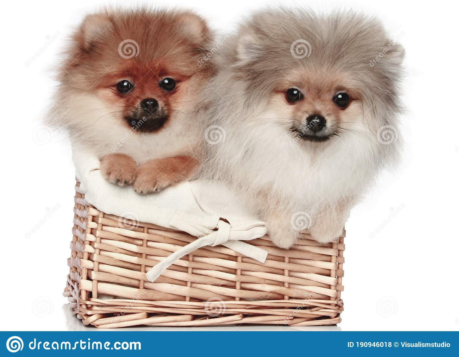 Brown Dog Puppies Funny Smiling Puppy Dog A Paw And Cute Puppy On White Stock Photo Image Of Friends Cute 190946018