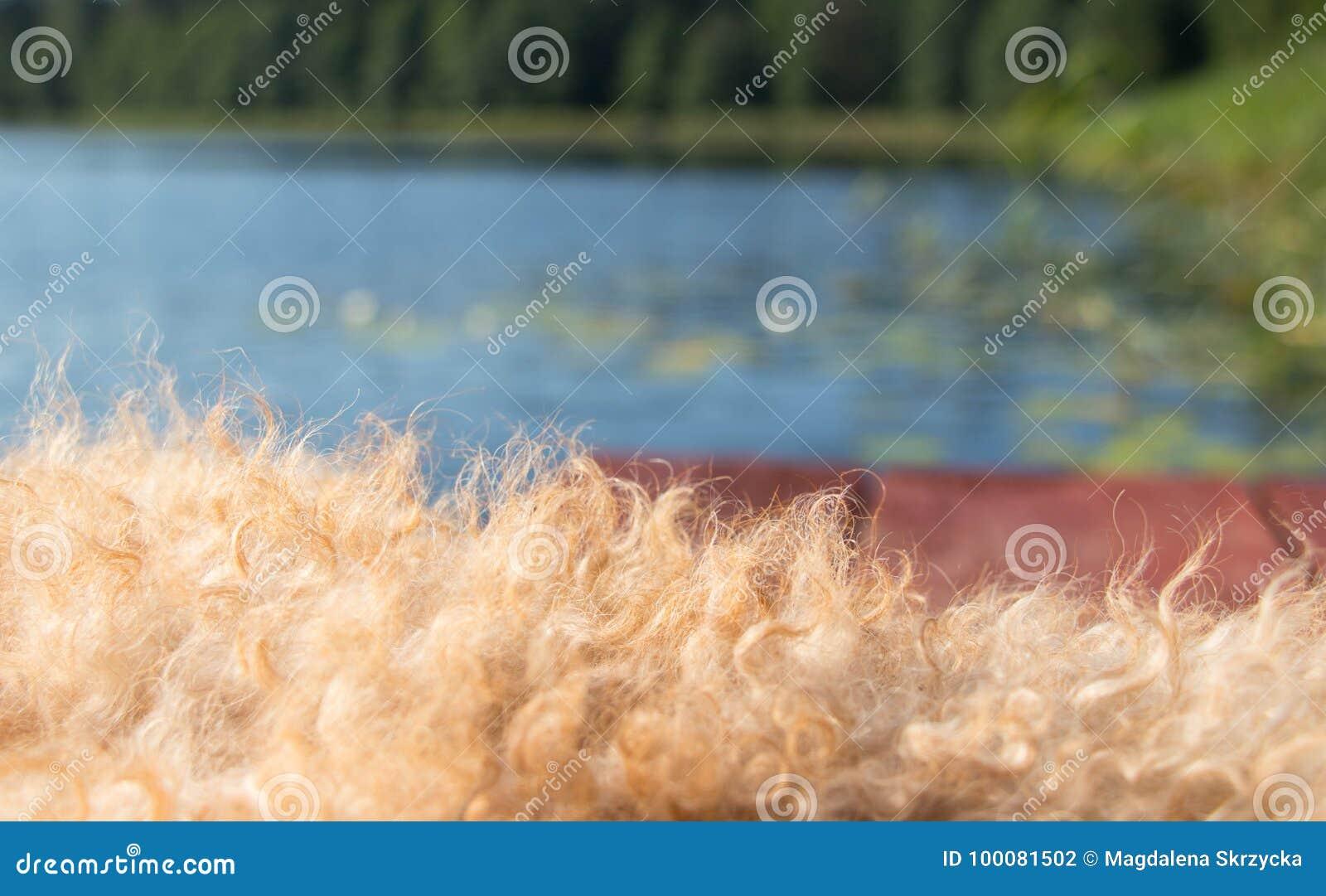 Brown drewniane deski z begie psem owłosionym przeciw niebieskiemu niebu, woda, zieleni płochy i las i