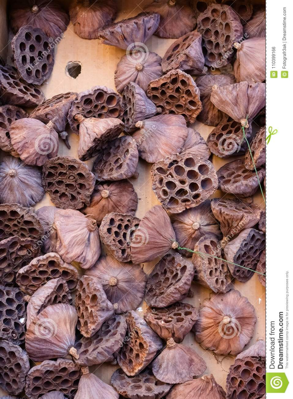 Brown Dried Seedless Lotus Flower Pods Stock Photo Image Of Acute