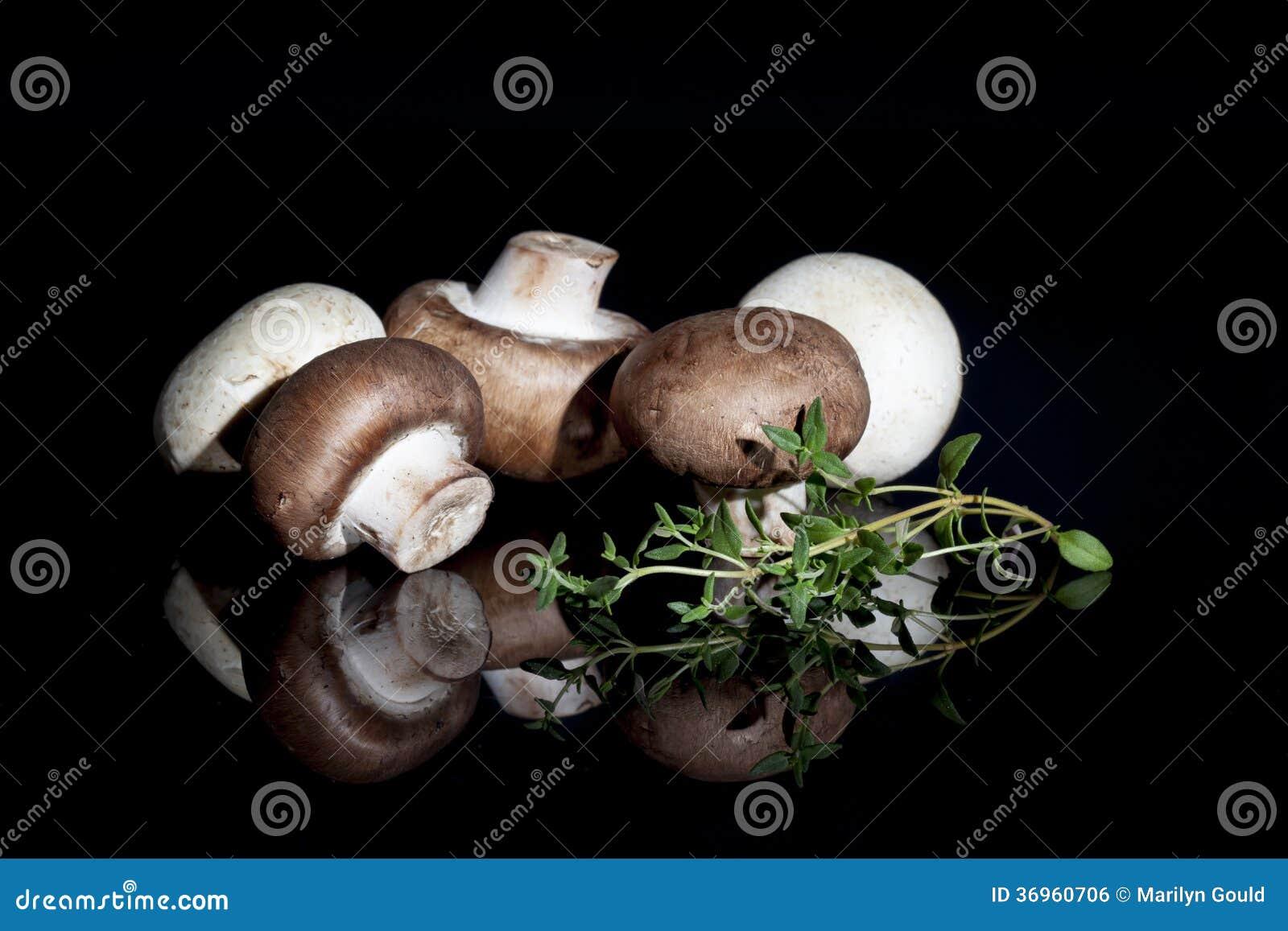 Brown e cogumelos brancos