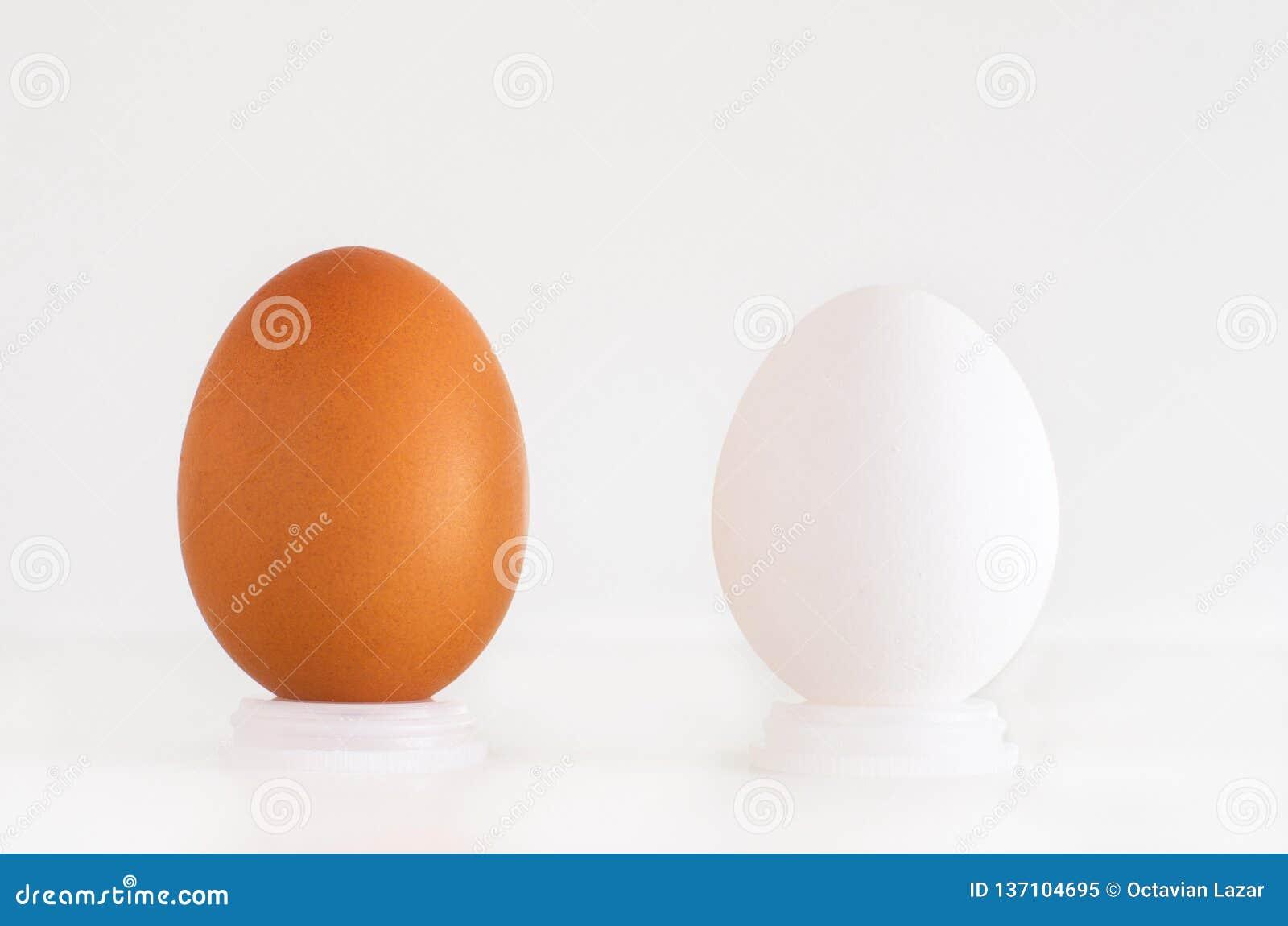 Brown e ovos brancos próximos um do outro