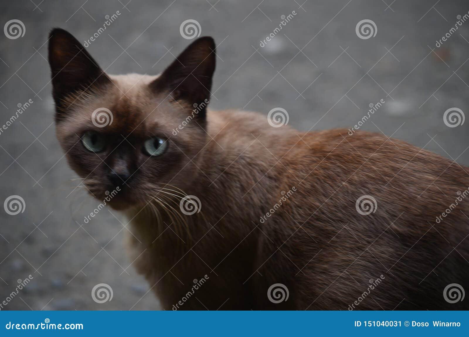 Brown-eyed cat bulging again wary of looking