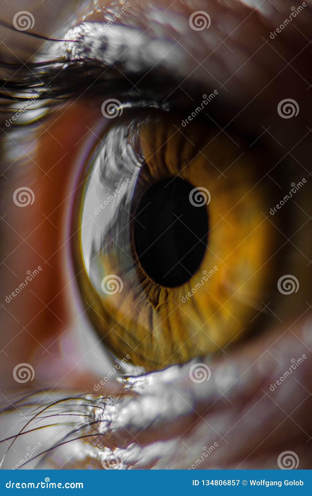 Brown Eyed a la muchacha