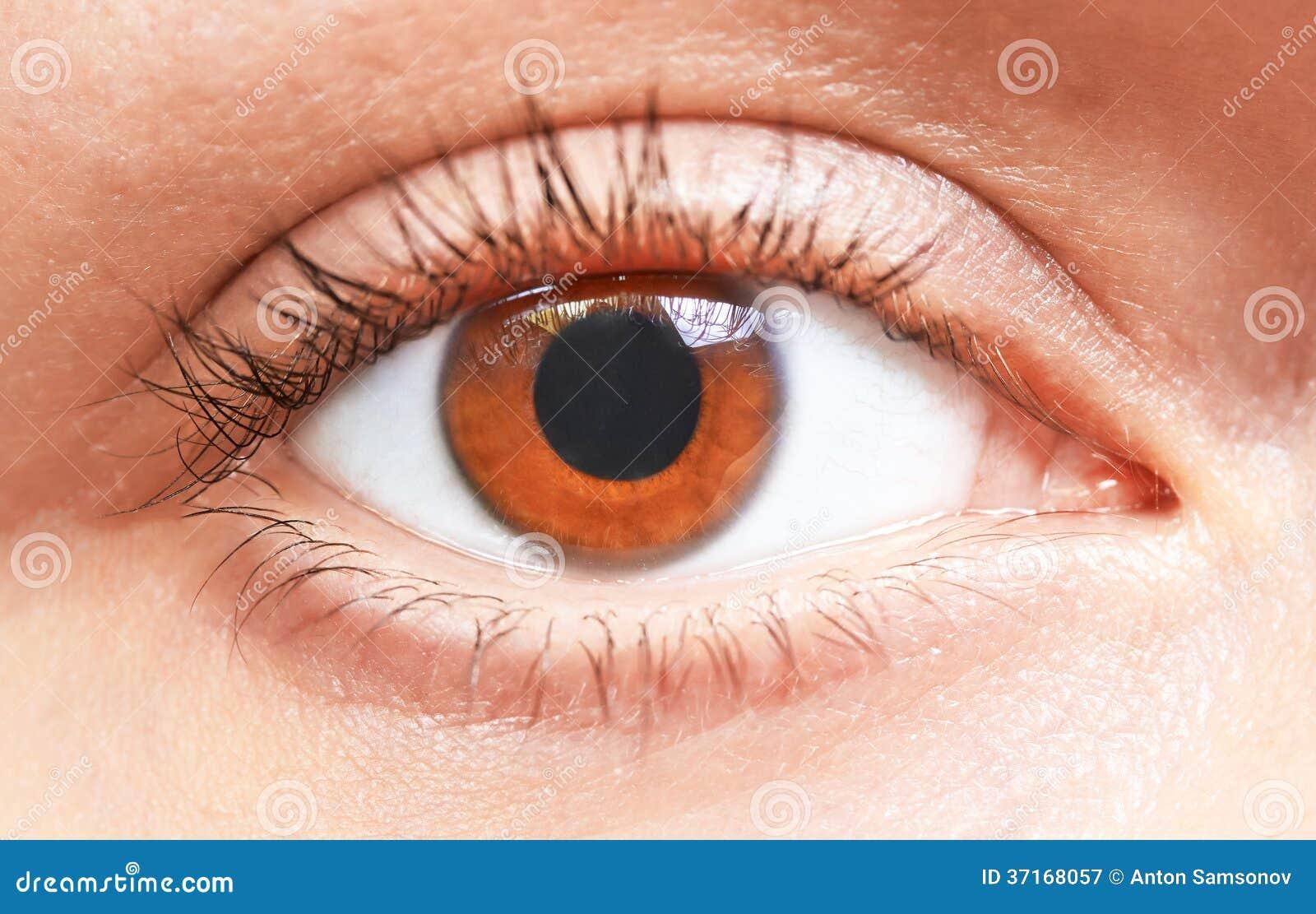 Brown Eyes Girl Stock Image. Image Of Female Healthy - 37168057