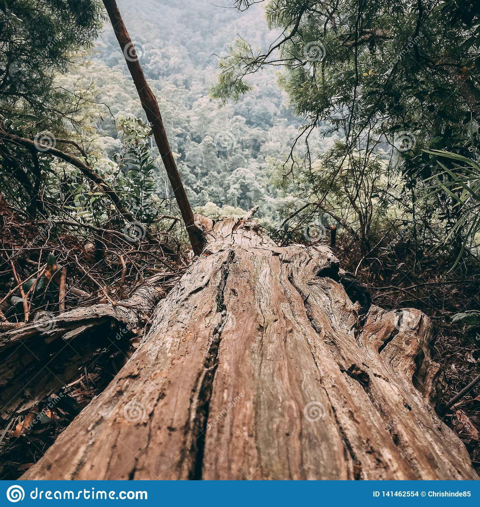 Brown fallen tree