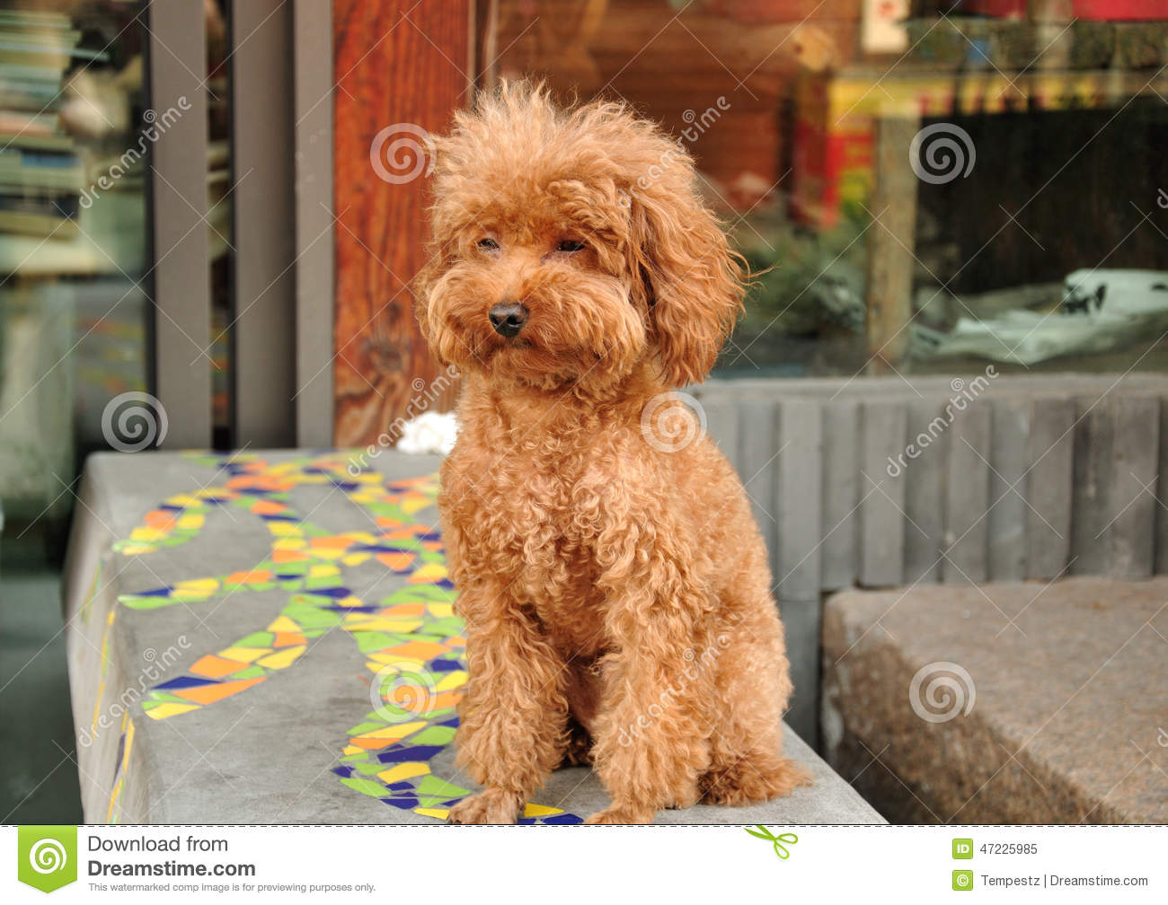 Brown Furry Dog Stock Image Image Of Bench Looking