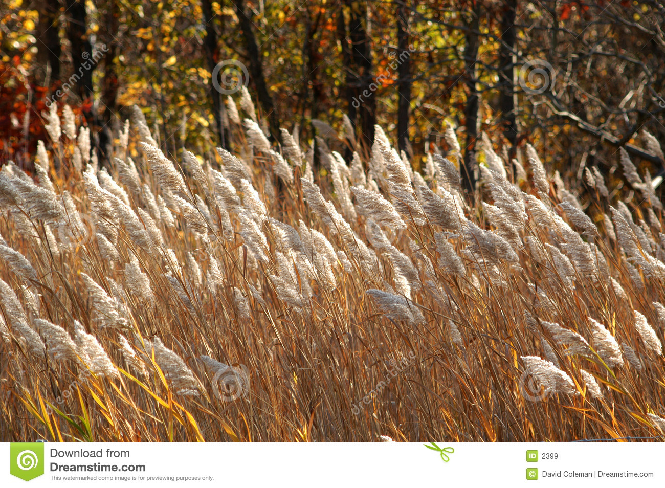 Download Brown Grasses stock image. Image of meadow, nature, forest - 2399