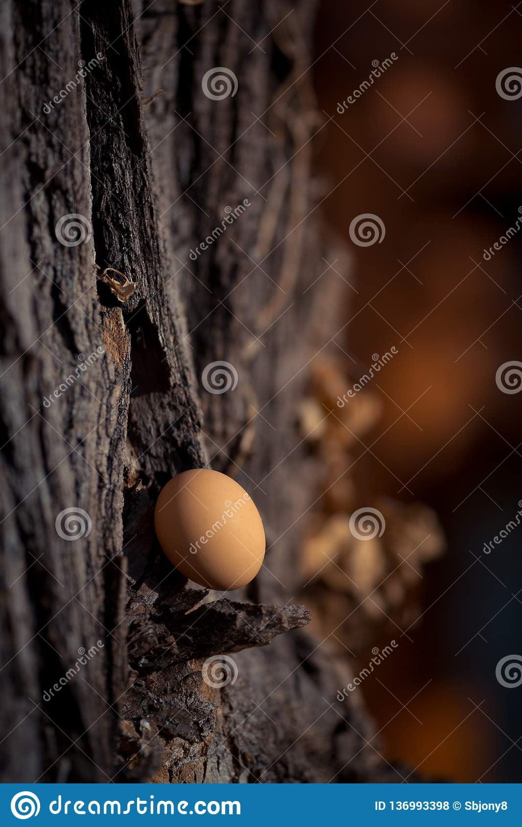 Brown hens egg on a wood. Concept. Brown hens egg on a wood. Close-up. Concept royalty free stock photos