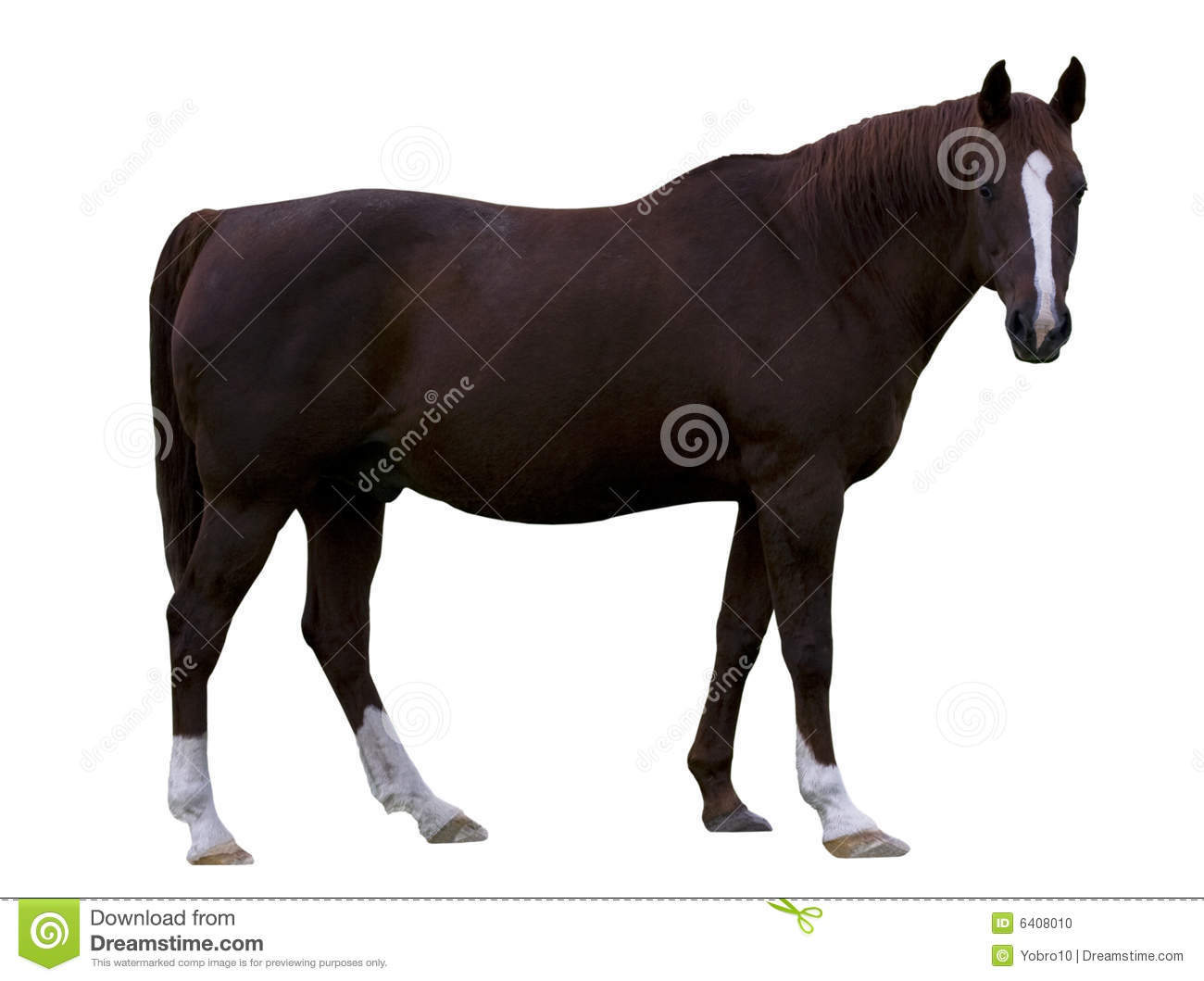 Download Brown Horse stock photo. Image of brown, muscular, hoof - 6408010