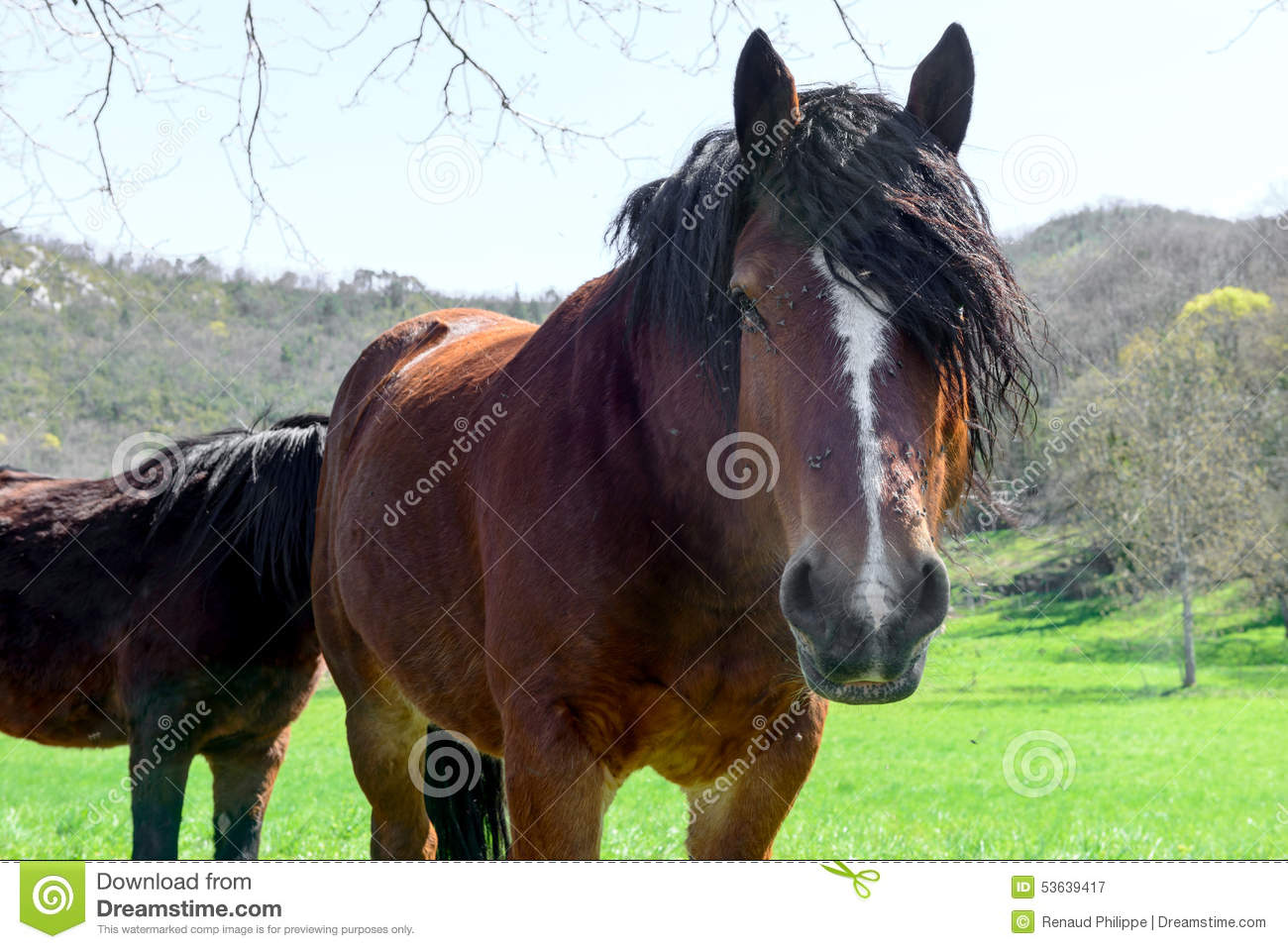 brown horse with black - photo #38